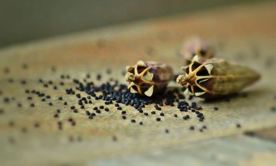 Sementes de papoila: Estas sementes são ricas em ómega-3, minerais, fibras e vitaminas. Têm também propriedades calmantes e podem ser incorporadas diariamente na alimentação.