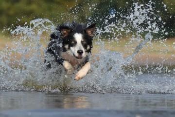 O Dia Mundial dos Animais assinala-se a 4 de outubro. Saiba que tipo de animal doméstico combina melhor com os seus traços de personalidade.