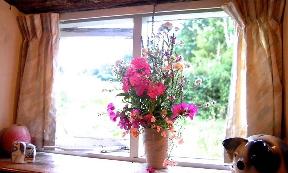 Tenha cuidado para não regar as plantas que estão dentro de casa em demasia, sob pena de aparecer bolor no fundo da planta.