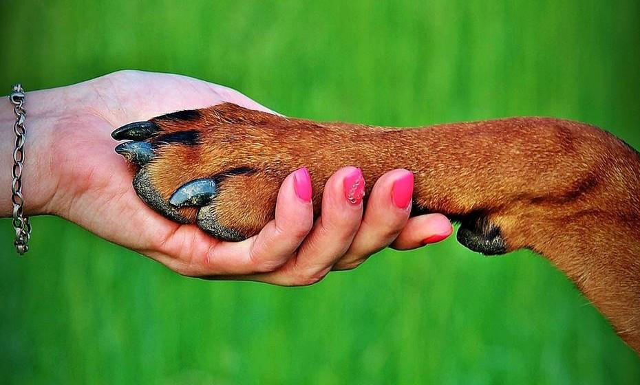 Organize uma atividade de voluntariado: Se o jardim da sua área está a precisar de uma limpeza ou se vê o número de animais abandonados aumentar, organize-se com os seus vizinhos para um dia solidário. É importante também para as crianças.