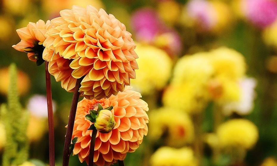 Visite um jardim botânico: Provavelmente há espaços na sua cidade que ainda não conhece. Deixe-se deslumbrar num jardim, enquanto desfruta da frescura que as plantas proporcionam num dia quente.