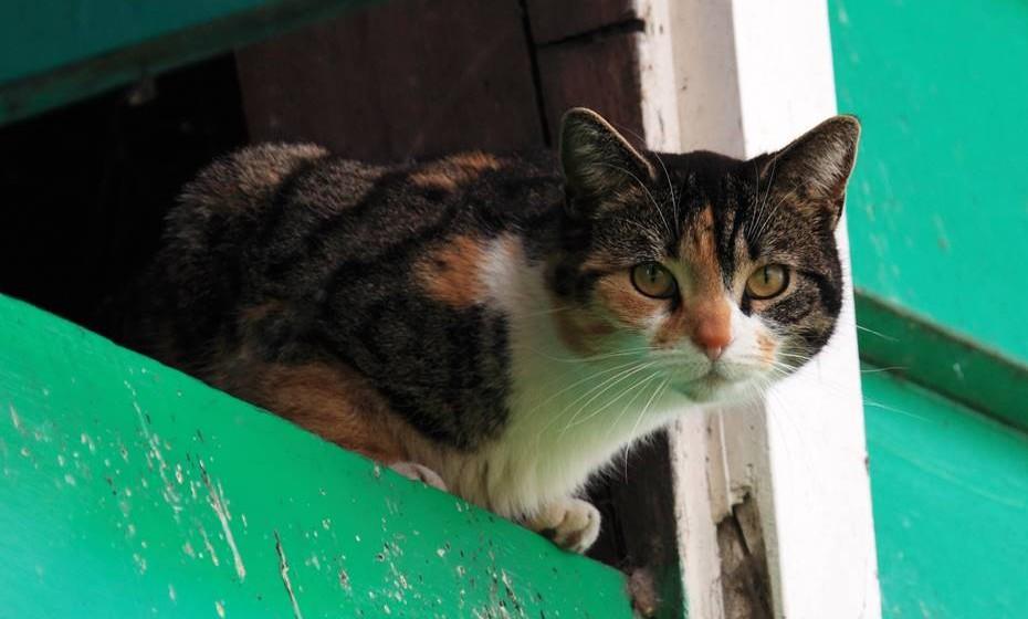 Gatos: Os gatos são criaturas místicas. Sonhar com gatos pode significar traição, porque estes animais representam a volúpia, o adultério e a sexualidade. Sonhar com filhotes de gato indica recuperação em termos de saúde.