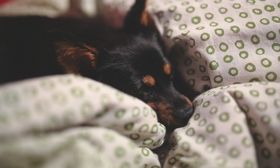 Certifique-se de que o seu colchão e as suas almofadas são confortáveis. Por mais sono que tenha, se não estiver confortável, não irá conseguir descansar como deseja.