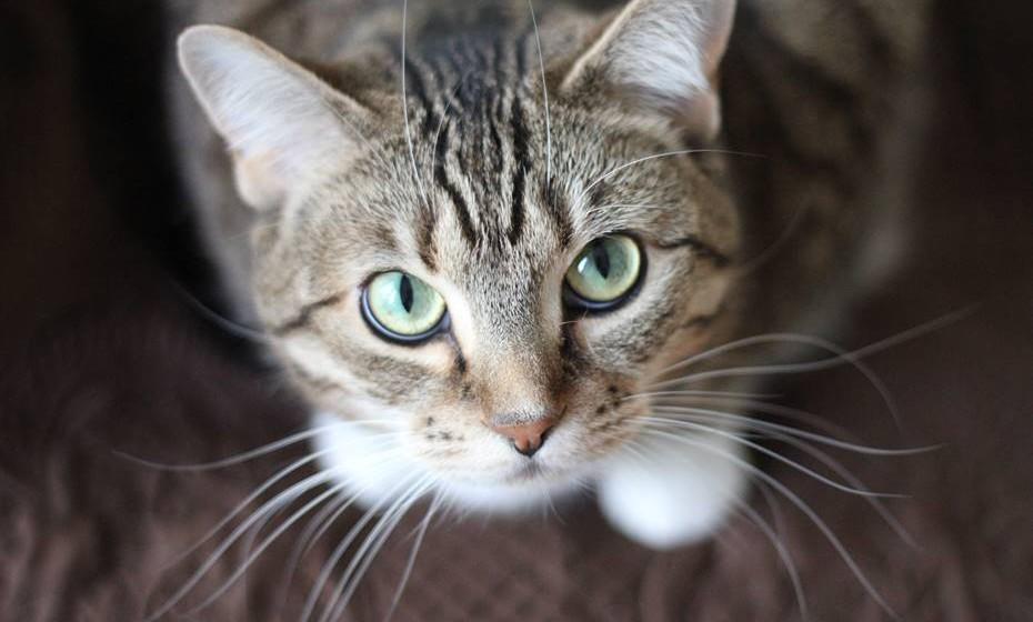 Os gatos são animais muito expressivos e mostram o que sentem através de sinais físicos. Aprenda a descodificar os seus comportamentos e melhore a comunicação entre ambos.