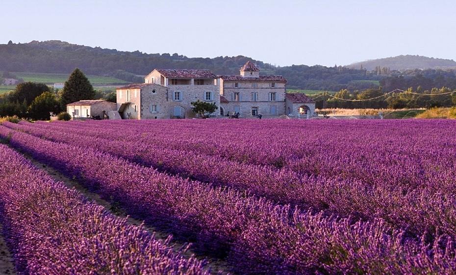 Campos de lavanda, França – Nos meses de verão, os campos de lavanda de Provença revestem-se de flores roxas e formam uma paisagem deslumbrante.
