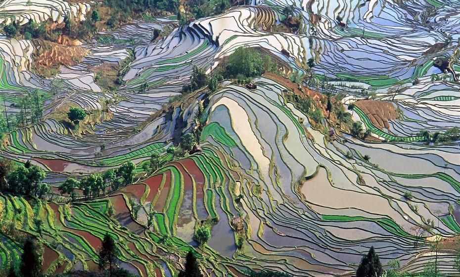 Yuanyang County, China - Os campos divididos criam uma matriz de cores em camadas imprevisíveis, além de que fornecem arroz para milhões de pessoas em todo o país.