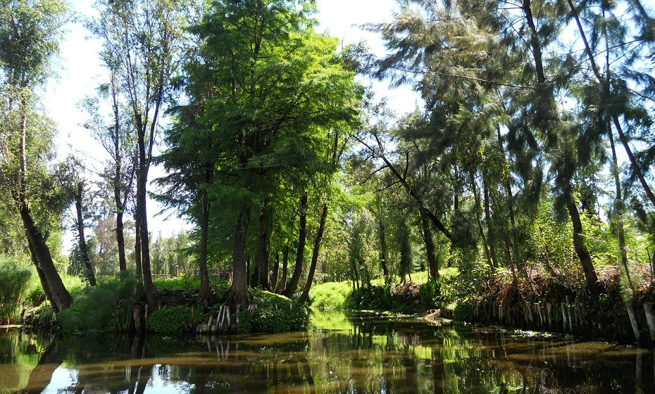 A Ilha das Bonecas em Xochimilco, México. Escondida entre muitos canais da região, o local é conhecido por ter bonecas (nem sempre inteiras) penduradas nas árvores e espalhadas pelo chão.