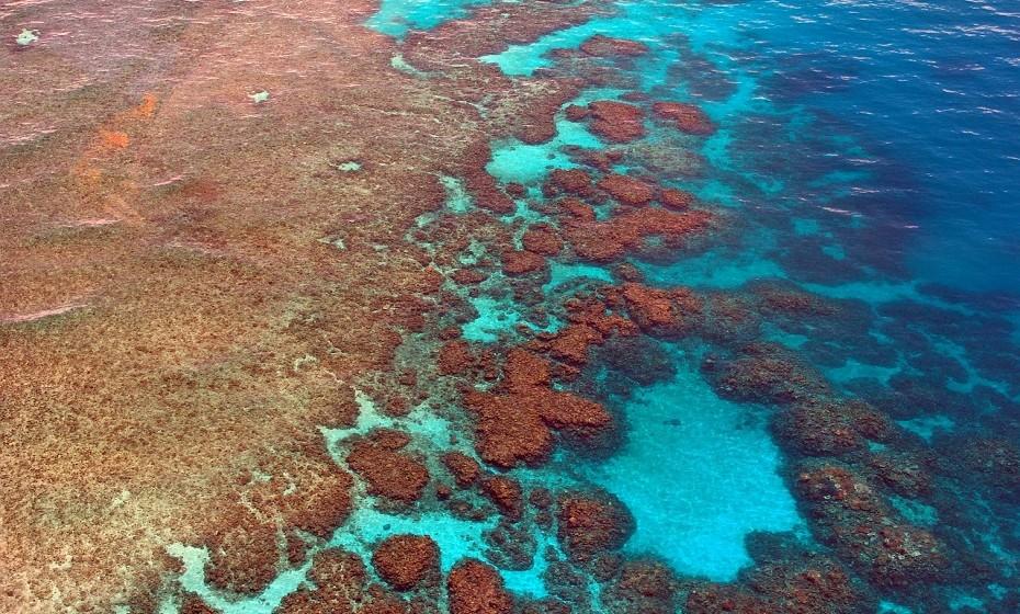 Grande barreira de coral, Austrália - Esta maravilha do mundo tem mais de 400 espécies de corais, 500 espécies de algas marinhas e 1500 espécies de peixe.