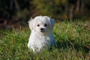 A especialista em cães, Tânia Ruivo, deixa-lhe uma lista de cuidados a ter com o seu cachorro.