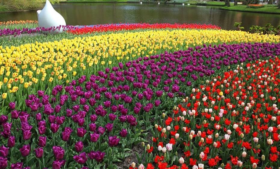 Campos de túlipas, Holanda - Nos primeiros meses da primavera, florescem nos campos imensas túlipas, numa disposição organizada e com cores vibrantes.