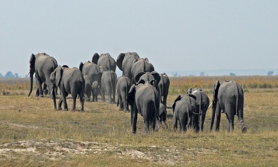 Botswana é um país sem costa marítima do sul de África. Destaca-se pelos seus diversos ecossistemas, é impossível usar apenas um modo de transporte num safari. Há muito para explorar, mas não pode perder o Parque Nacional de Chobe, o lar de uma das maiores manadas de elefantes do mundo.