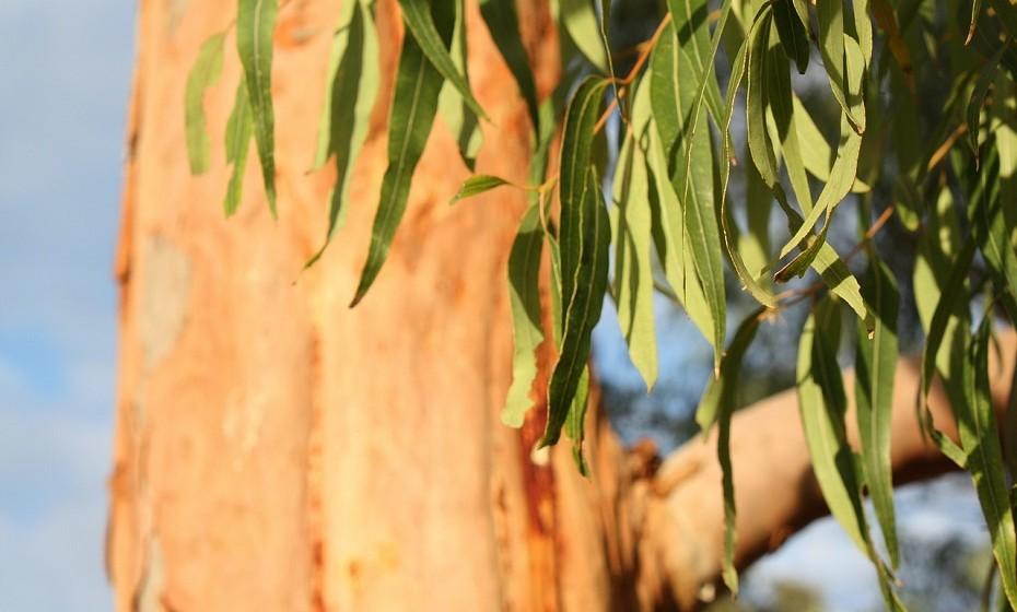 Pendure alguns ramos de eucalipto no chuveiro e ligue a água quente durante alguns segundos. O cheiro irá propagar-se por toda a casa de banho.