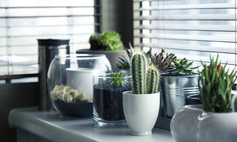 Não está interessada em cheiros doces ou frutados? Coloque plantas verdadeiras na sua sala de estar. As plantas de aloé-vera são uma ótima opção, pois ajudam a ver-se livre das toxinas do ar.