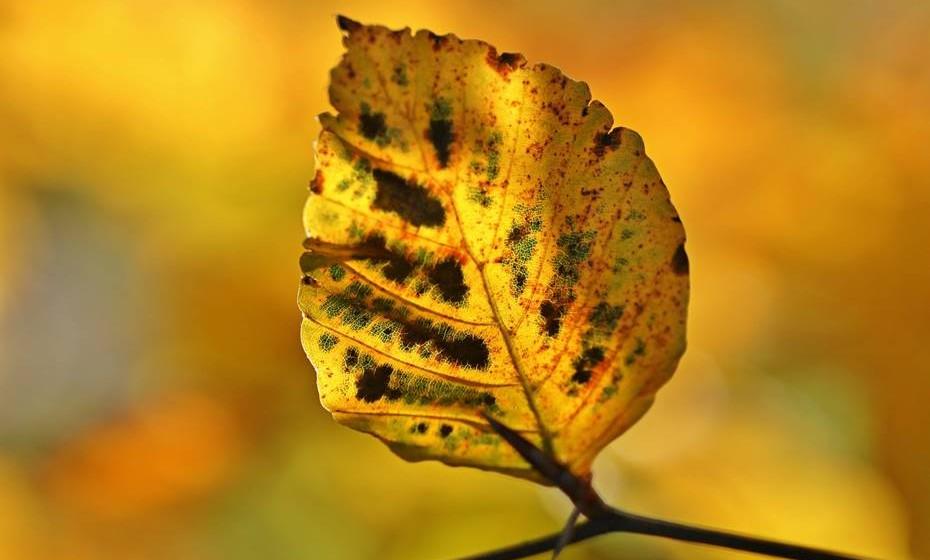 A evitar: as plantas com casca arrancada ou escritas são hostis. Árvores com fungos ou buracos estão doentes e também devem ser evitadas.