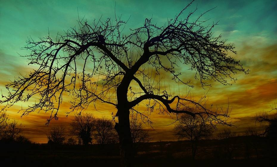 Helena Lambrou explica que, quando abraçamos uma árvore, sentimos os nossos pés a afundarem na terra, como se criassem raízes. Um fluxo de energia corre através das mãos encostadas ao tronco por todo o corpo. Depositamos as nossas energias negativas e recebemos energias positivas. No final sentimos tranquilidade, vinda da mudança de padrão. A árvore envia as más energias para a terra, através das raízes.