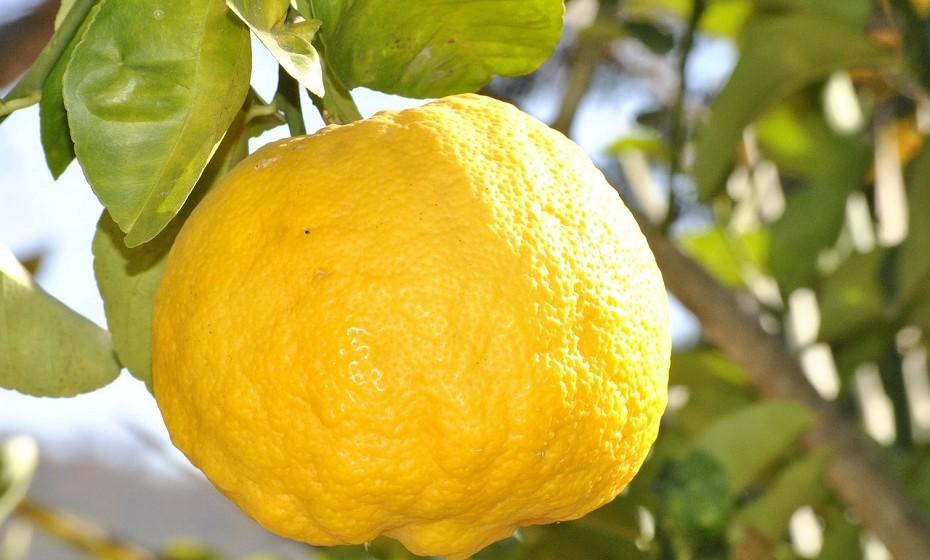 O limão é um dos alimentos mais usados na limpeza. Retira o mau cheiro do microondas, do frigorífico e retira algumas manchas mais teimosas da roupa. Esprema o sumo de um limão na área afetada e deixe secar ao sol.