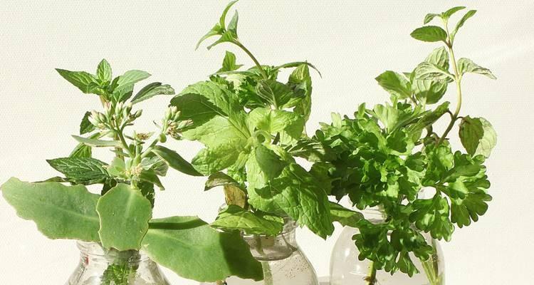 O que é a naturopatia?