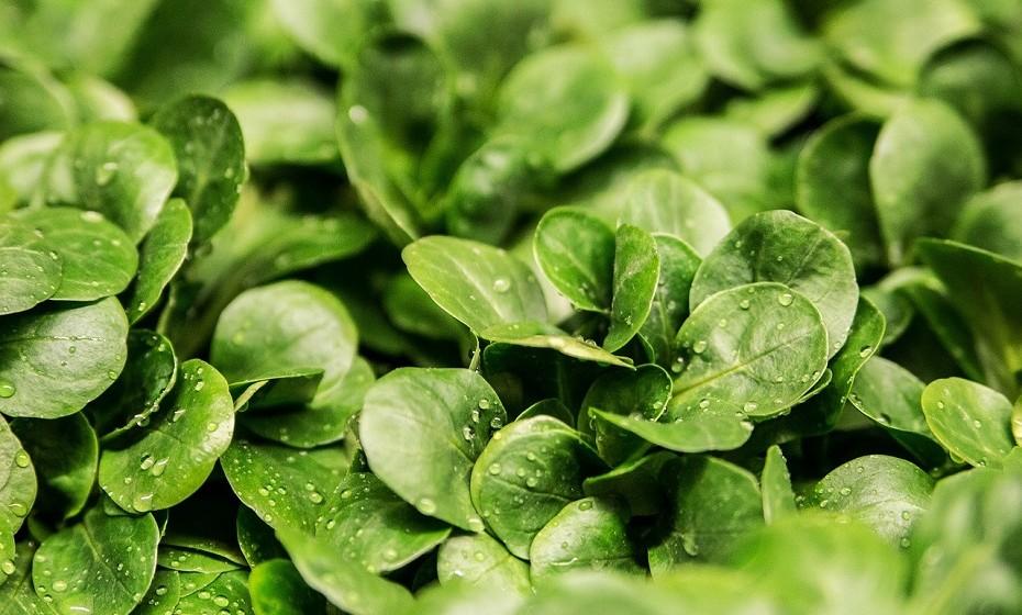 As principais cadeias de supermercado já começam também a vender produtos biológicos. Os supermercados Aldi tomaram a dianteira e já têm a sua própria marca biológica – GutBio - com produtos a preços acessíveis.