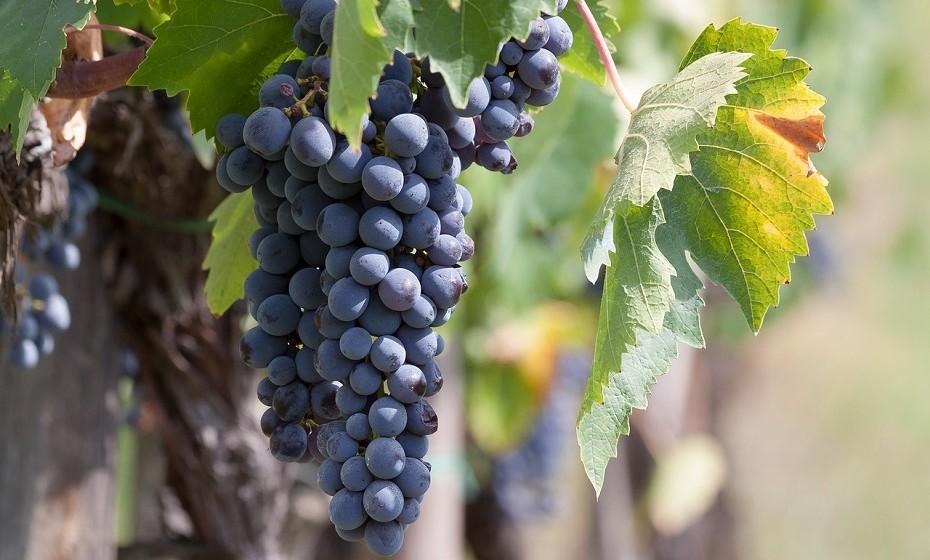 As uvas contêm antocianinas que reduzem a inflamação.