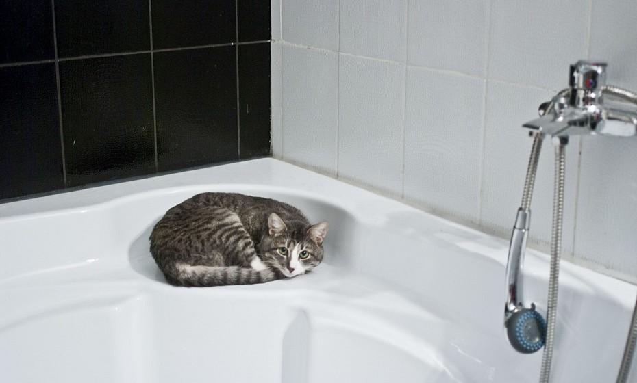Limpe os azulejos da casa de banho e da cozinha com um produto de limpeza com pH neutro.
