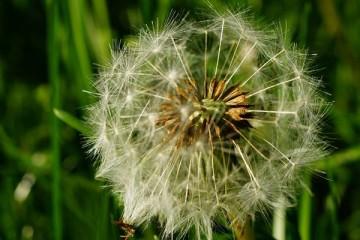 Aplicação permite a doentes alérgicos controlar a doença