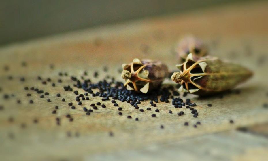 As sementes são pequenas potências nutricionais. Algumas são bastante ricas em cálcio, incluindo as sementes de papoila, de sésamo, de aipo e chia. Por exemplo, uma colher de sopa de semente de papoila tem 13% da DDR.