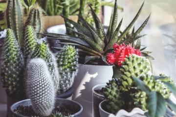 As plantas têm a capacidade de mudar qualquer ambiente, trazendo mais cor e mais vida ao espaço. Veja aqui as nossas sugestões de plantas para decorar a sua casa e os cuidados a ter com elas.