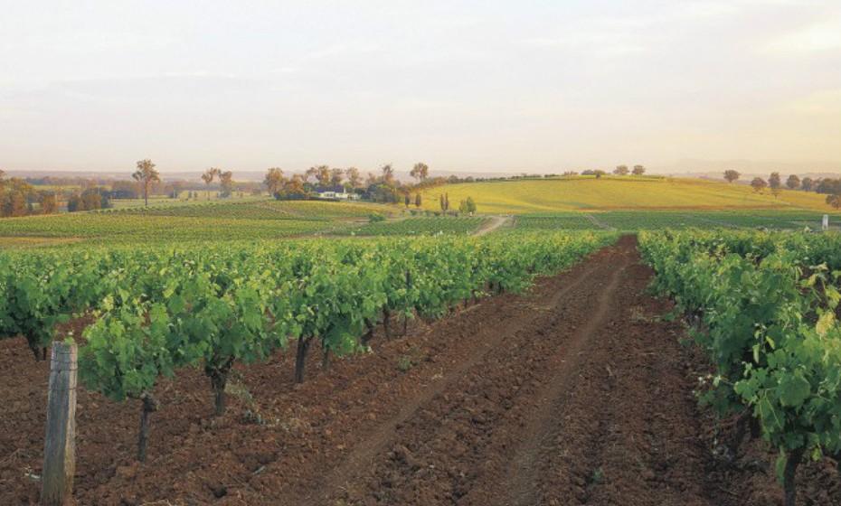 Hunter Valley, Austrália. Esta é a região de vinhos mais próxima de Sidney. É considerada uma viagem animada, repleta de humor australiano. É uma das regiões vinícolas mais quentes do mundo, com temperaturas de 35 a 40ºC no verão.