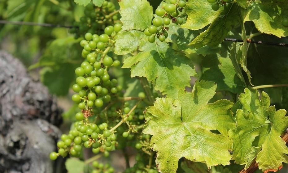 Vayots Dzor, Arménia. De acordo com a Bíblia, a Arménia foi a primeira região produtora de vinho no mundo, uma vez que foi nas encostas do Monte Ararat que Noé plantou a primeira videira após o dilúvio. Os seus passeios organizados na Areni Noir valem completamente a pena. Fotografias: CNN.