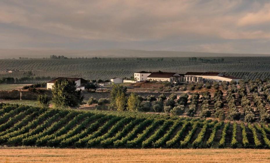 Alentejo, Portugal. Com mais de 250 produtores de vinho em oito regiões denominadas registadas, o Alentejo é uma das maiores regiões vitícolas em Portugal. A variedade surpreendente de vinhos é facilmente explicada pelos diferentes tipos de solo: graníticos, calcíferos e mediterrâneos vermelhos. Ao longo da visita, os visitantes podem parar em  adegas e provar vinhos e iguarias locais.
