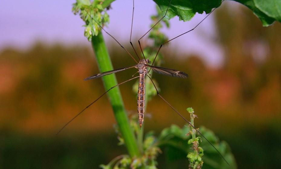 Use repelente e aplique ao longo do dia. À noite, use uma mosquiteira tratada com inseticida.