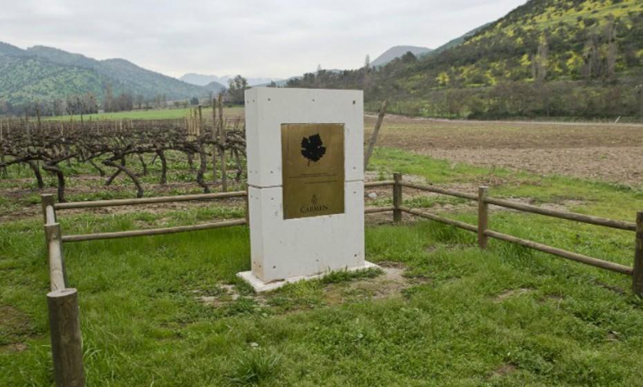 Maipo, Chile, é o berço da indústria vinícola chilena. Produz essencialmente vinhos tintos como Cabernet, Pinot Noir e Carmenere.