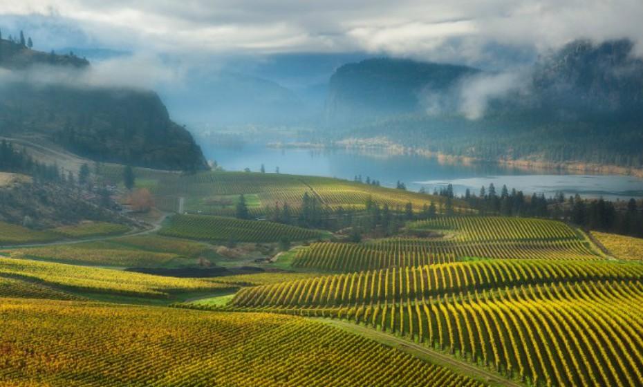 Apesar dos climas extremos de Okanagan, Canadá, as vinhas têm prosperado. A primeira adega foi fundado em 1932 por Calona e, até por volta de 1990, havia apenas 19 propriedades. Em 2016, esse número explodiu para 255 vinícolas regionais, com cerca de 40% das uvas provenientes de terras arrendadas.