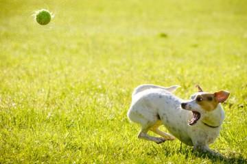 Os cães preferem um osso ou um elogio?
