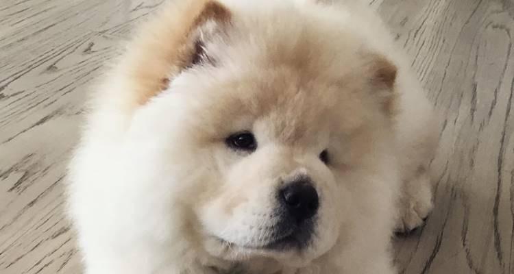Justin Bieber sai do Instagram, mas abre conta para o seu cão