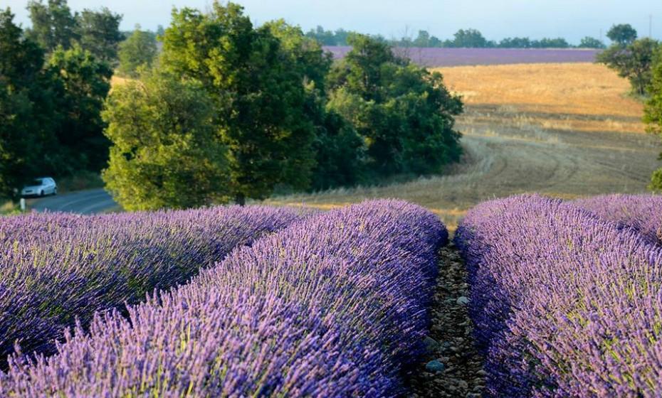 The Luberón, França, é conhecido pelas enormes filmes de arbustos de lavanda que criam um cenário lilás vibrante e incrivelmente bonito. Os campos de Sénanque Abbey, perto de Gordes, fornecem a exibição por excelência.