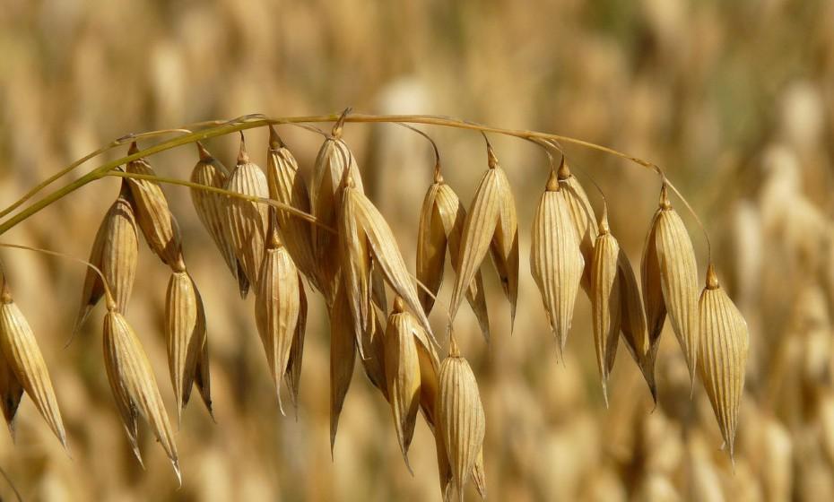 Vários estudos científicos sugerem que a deficiência de vitamina B6 diminui a resposta do sistema imunitário. Esta vitamina pode ser encontrada na aveia, trigo e arroz.