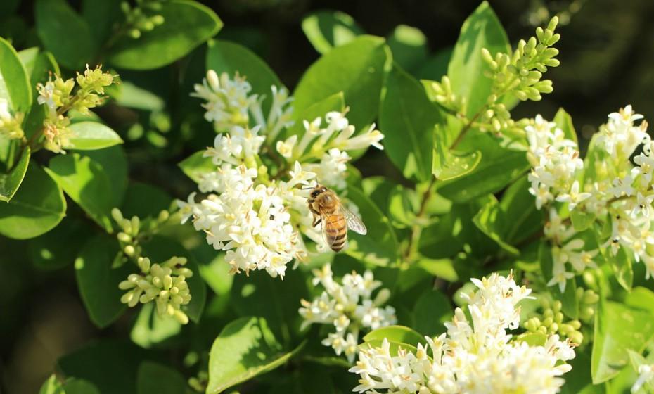 Própolis é uma substância resinosa obtida pelas abelhas através da colheita de resinas da flora (pasto apícola) da região e alteradas pela ação das enzimas contidas na sua saliva. É rico em bioflavonoides e, como tal, tem um efeito antibacteriano, antifúngico e antibiótico. É considerado um excelente produto para fortalecer o sistema imunitário.