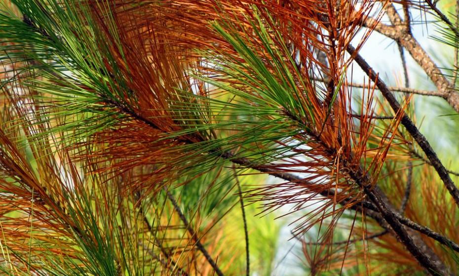 Gumersindo Cubo, 101 revela o truque para da sua longevidade: «Foi por ter inalado a resina de pinheiro da floresta onde eu vivia quando era criança».