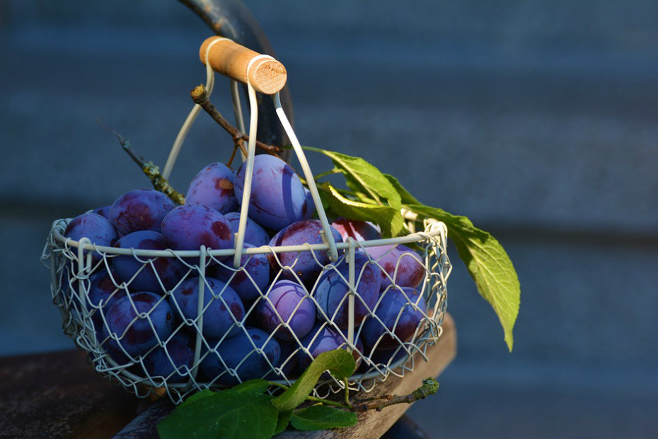 Fruta e legumes: frutos silvestres, tomates, repolho, couve, alho e brócolos.