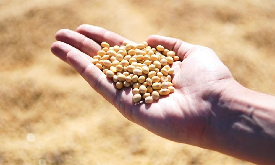 As alergias à soja são mais comuns em bebés e crianças com menos de três anos. São desencadeadas pela proteína da soja. No entanto, cerca de 70% das crianças que são alérgicas à soja superam a alergia.