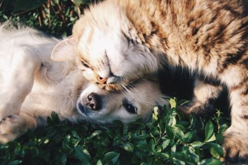 Gatos são tão inteligentes como os cães, diz estudo