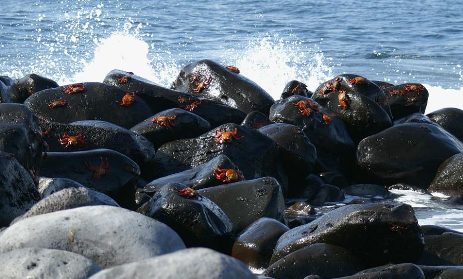 10. Praia Galapagos, Baía da Tortura - Equador