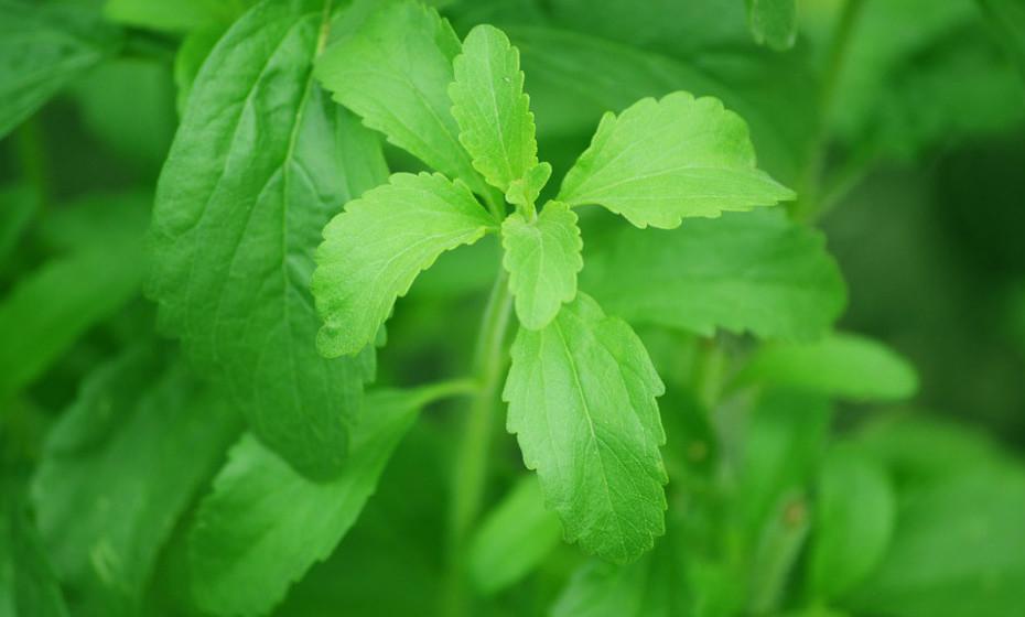 Stevia é um adoçante natural extraído das folhas de um arbusto sul-americano - Stevia rebaudiana. Contém zero calorias e alguns estudos indicam que diminui o nível de açúcar no sangue e os níveis de insulina. Esta é talvez a escolha mais saudável.