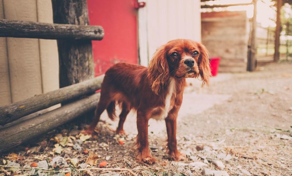 No mundo dos cães, o contacto visual direto pode ser percebido como uma ameaça. Quando um cão desvia o olhar e evita o contacto visual é a sua maneira de dizer que não tem qualquer desejo em desafiá-la/o. Está a fazer o seu melhor para ser educado e não conflituoso.