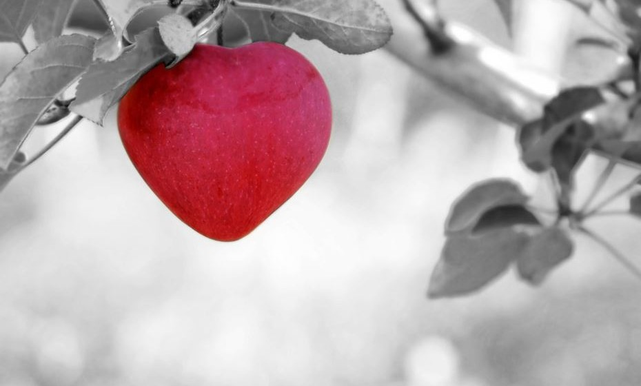 «O amor é uma perigosa doença mental», Platão, filósofo da Grécia Antiga.
