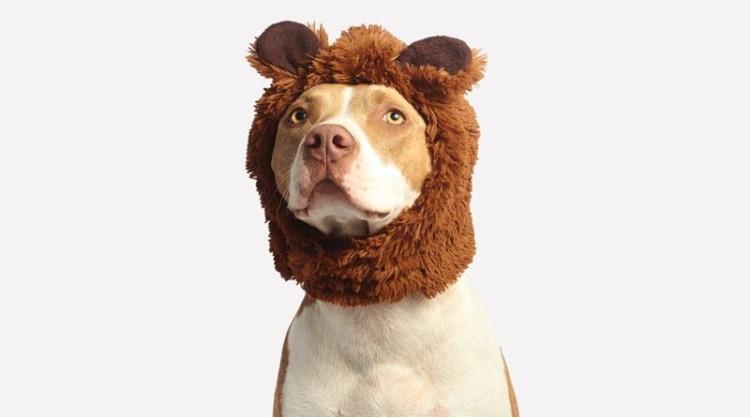 Leve o seu animal de estimação a passear ao Pet Festival