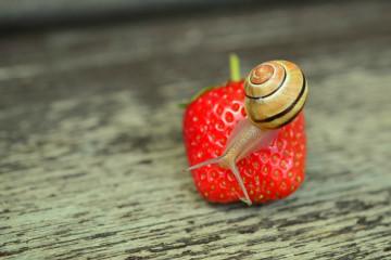 Os resíduos de pesticidas podem permanecer na fruta e nos legumes mesmo depois de serem lavados. Conheça de seguida o top 12 dos alimentos com maior concentração de resíduos tóxicos, segundo o último relatório anual do Environmental Working Group, uma entidade americana que se debruça sobre o estudo do ambiente e da alimentação.