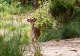 A poucos quilómetros de Lisboa, encontra-se a Tapada Nacional de Mafra. Este ecossistema único no país permite observar vários animais em estado selvagem e propõe muitas outras experiências em turismo de natureza destinadas a famílias e crianças. Uma sugestão para as férias do Natal.