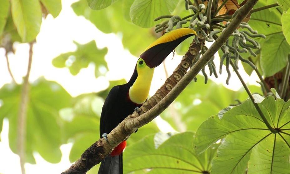 12. Costa Rica